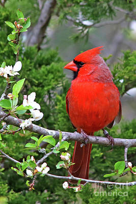Photograph - Flirty Red by James F Towne