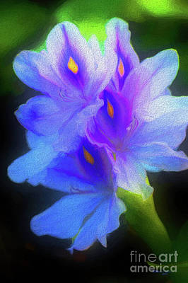 Hyacinths Wall Art - Photograph - Floating Amazement by Marvin Spates