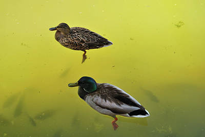 Photograph - Floating Around by Ron Cline