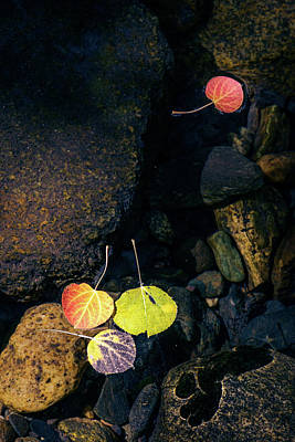 Photograph - Floating Aspen Leaves by Alexander Kunz