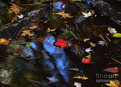 Photograph - Floating Autumn Leaves by Patti Whitten