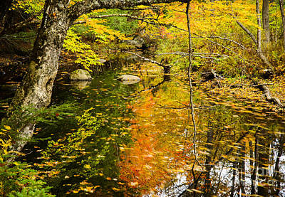 Maine Landscapes Photograph - Floating Down Stream by Alana Ranney