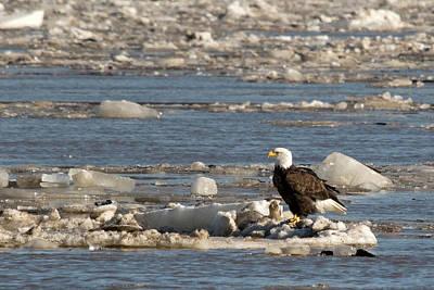 Photograph - Floating Down The Mississippi by Steve Stuller