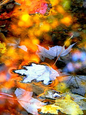 Photograph - Floating by Elfriede Fulda