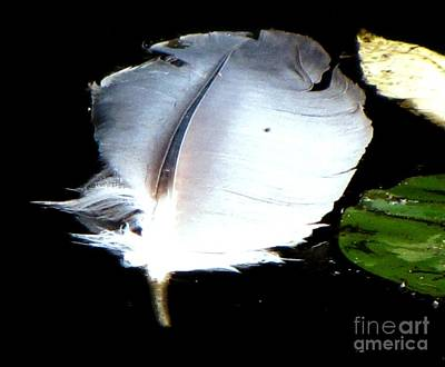 Photograph - Floating Feather In Pond by Melissa Stoudt