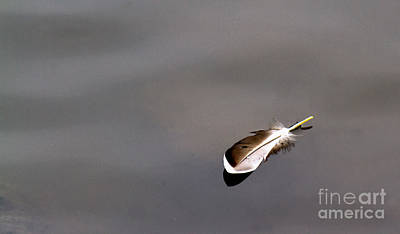 Photograph - Floating Feather by Jale Fancey