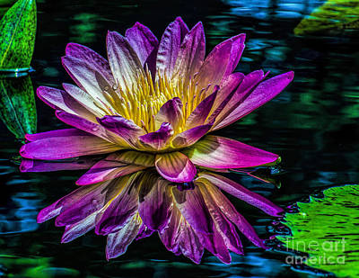 Photograph - Floating Floral Beauty by Nick Zelinsky