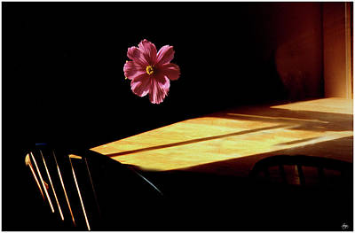 Photograph - Floating Flower Mindscape by Wayne King