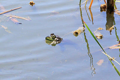 Sports Royalty-Free and Rights-Managed Images - Floating Frog by Shoal Hollingsworth