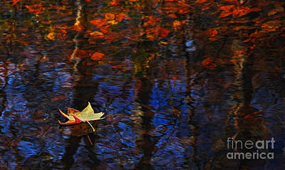 Photograph - Floating In Fall by Randy Rogers