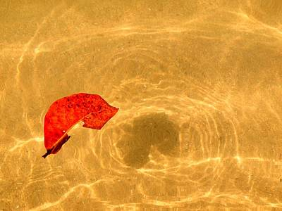 Photograph - Floating In Gold by Steven Robiner