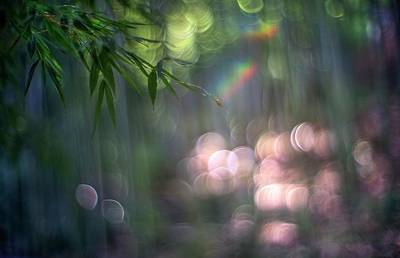 Photograph - Floating In The Bamboo Forest by Peter Thoeny