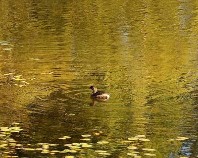 Photograph - Floating Into Fall by I'ina Van Lawick