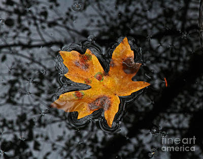 Photograph - Floating Leaf by Gary Wing