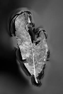 Photograph - Floating Leaf by Hitendra SINKAR