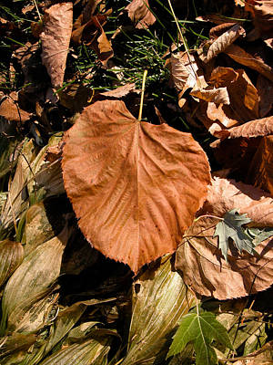 Photograph - Floating Leaf by Mike Evangelist