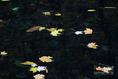 Photograph - Floating Leaves II by Mary Haber