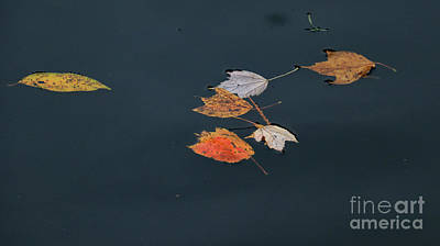 Photograph - Floating Leaves IIi by Mary Haber