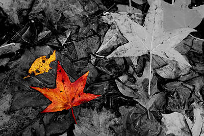 Floating Leaves Original by Jason Blalock
