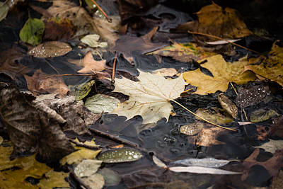 Photograph - Floating Leaves by Mike Evangelist