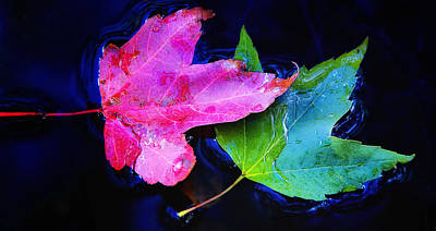 Photograph - Floating Leaves by Peg Runyan