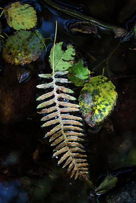 Photograph - Floating Leaves by Robert Potts
