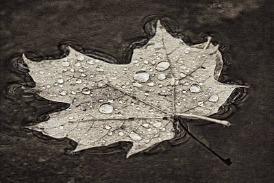 Photograph - Floating Maple Leaf Bw by Theo O'Connor