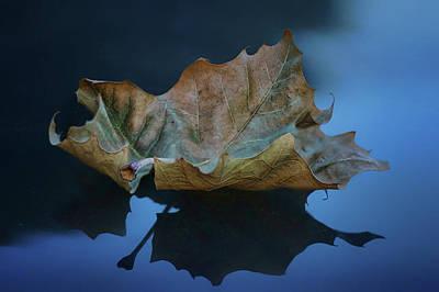 Photograph - Floating by Nikolyn McDonald