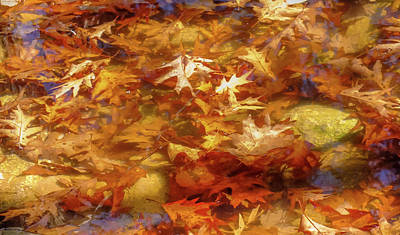 Of Autumn Photograph - Floating Of Autumn by Karen Wiles