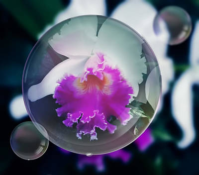 Photograph - Floating Orchid by Pamela Walton