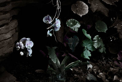 Photograph - Floating Orchids by Wayne King