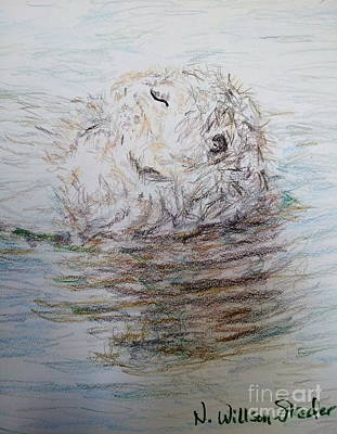 Otter Drawing - Floating Otter by N Willson-Strader