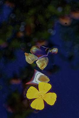 Photograph - Floating Petals by Steve Gravano