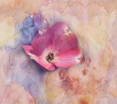 Floating Pink Bloom Print by Toni Hopper
