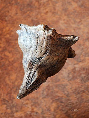Photograph - Floating Shell by Christopher Holmes