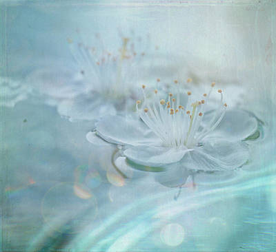 Y120817 Photograph - Floating by Sue Harley