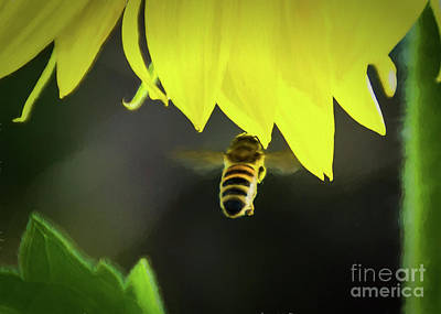 Photograph - Floating To Yellow by Janice Rae Pariza