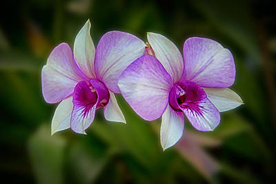 Digital Art - Floating Twin Orchids by John Haldane