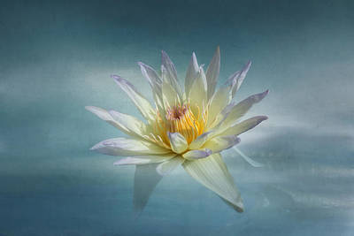 White Water Lily Photograph - Floating Water Lily by Kim Hojnacki