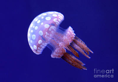 Photograph - Floating White Spotted Jellyfish by Nina Silver