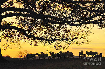Flock At Sunrise Art Print by Thomas R Fletcher