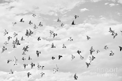 Photograph - Flock by Glennis Siverson