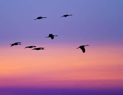 Flock Original