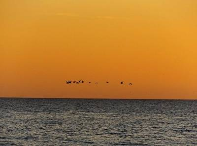 Photograph - Flock by Julie Pappas