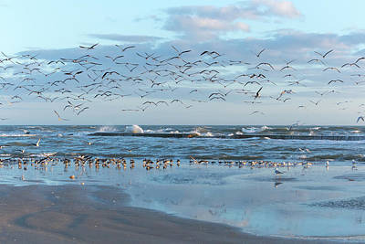 Purely Purple - Flock of birds on beach and in the air by Daniel Ray
