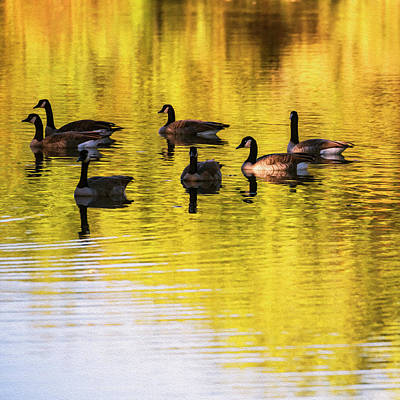 Photograph - Flock Of Canada Geese In A Pond Digital Painting by Vishwanath Bhat