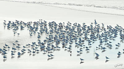Photograph - Flock Of Coastal Seagulls  by Dee Browning