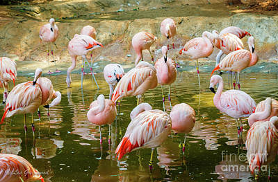 Photograph - Flock Of Flamingos by Les Greenwood