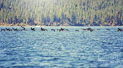 Flock Of Geese Art Print by Janie Johnson