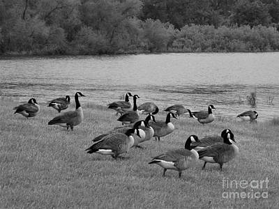 Photograph - Flock Of Geese by Sara Raber
